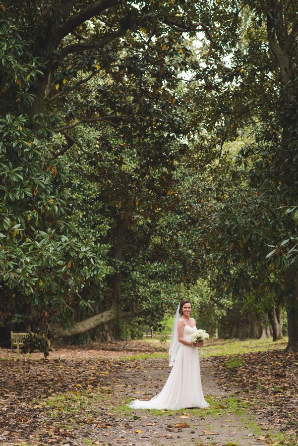 magnolia tree bridal